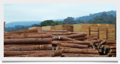 Cost Reductions: The New Motto of all Brazilian Wood Consumers
