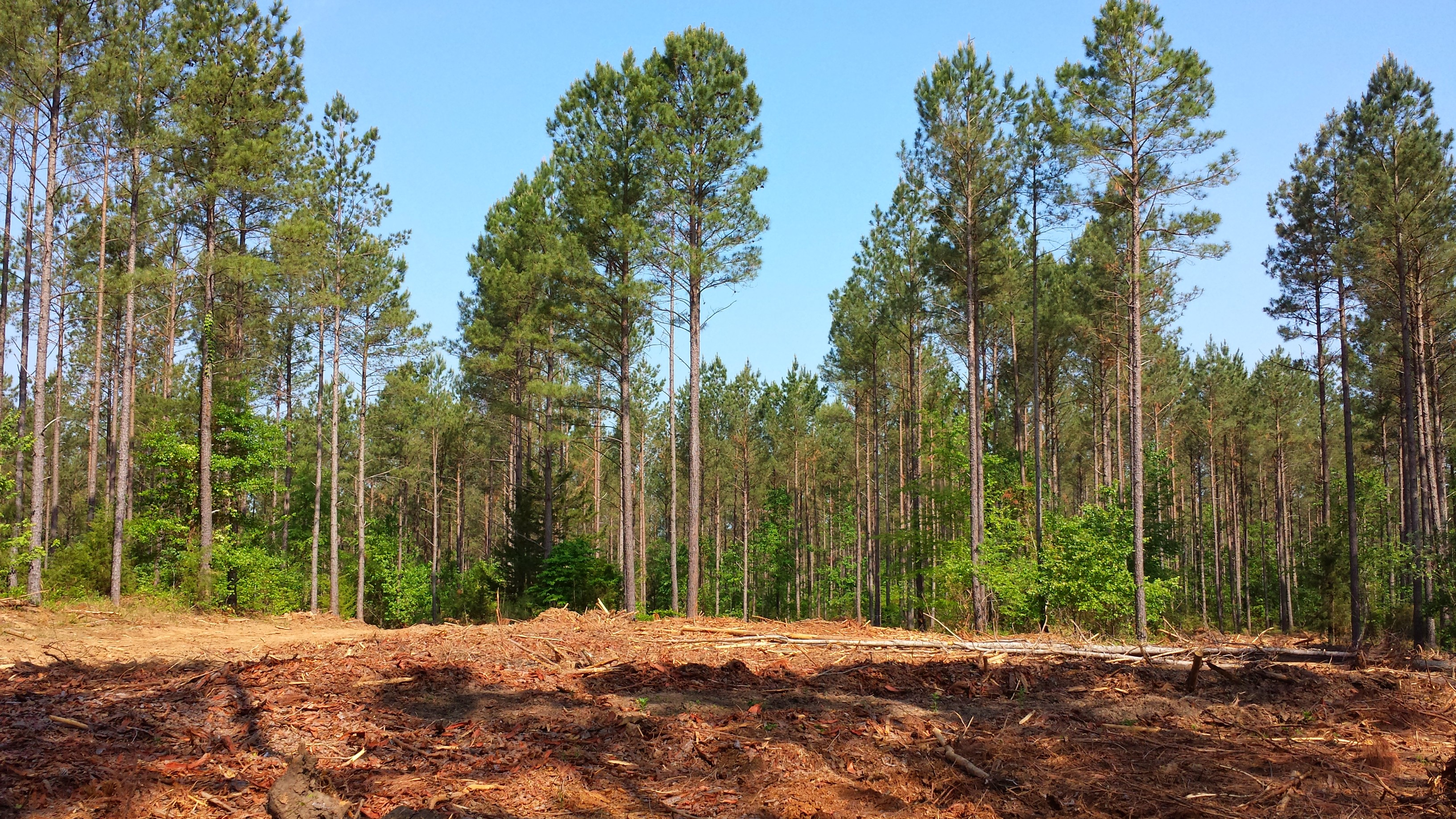 Spending Bill Promotes Carbon Neutrality of Biomass, Working Forests