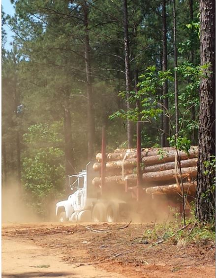 Extract Value from your Wood Supply Chain with Data