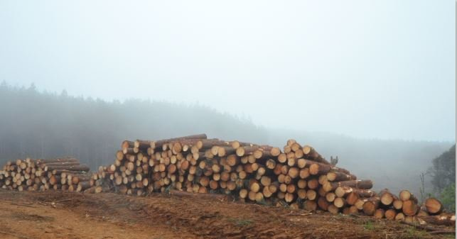 Ripe for Investment: South American Forestry Markets