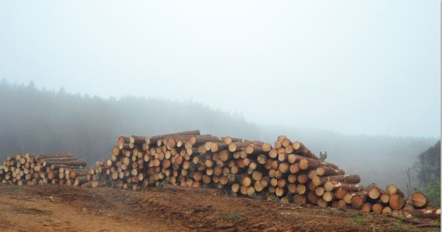 Brazil's Political Realities & the Environment for Forest Investments