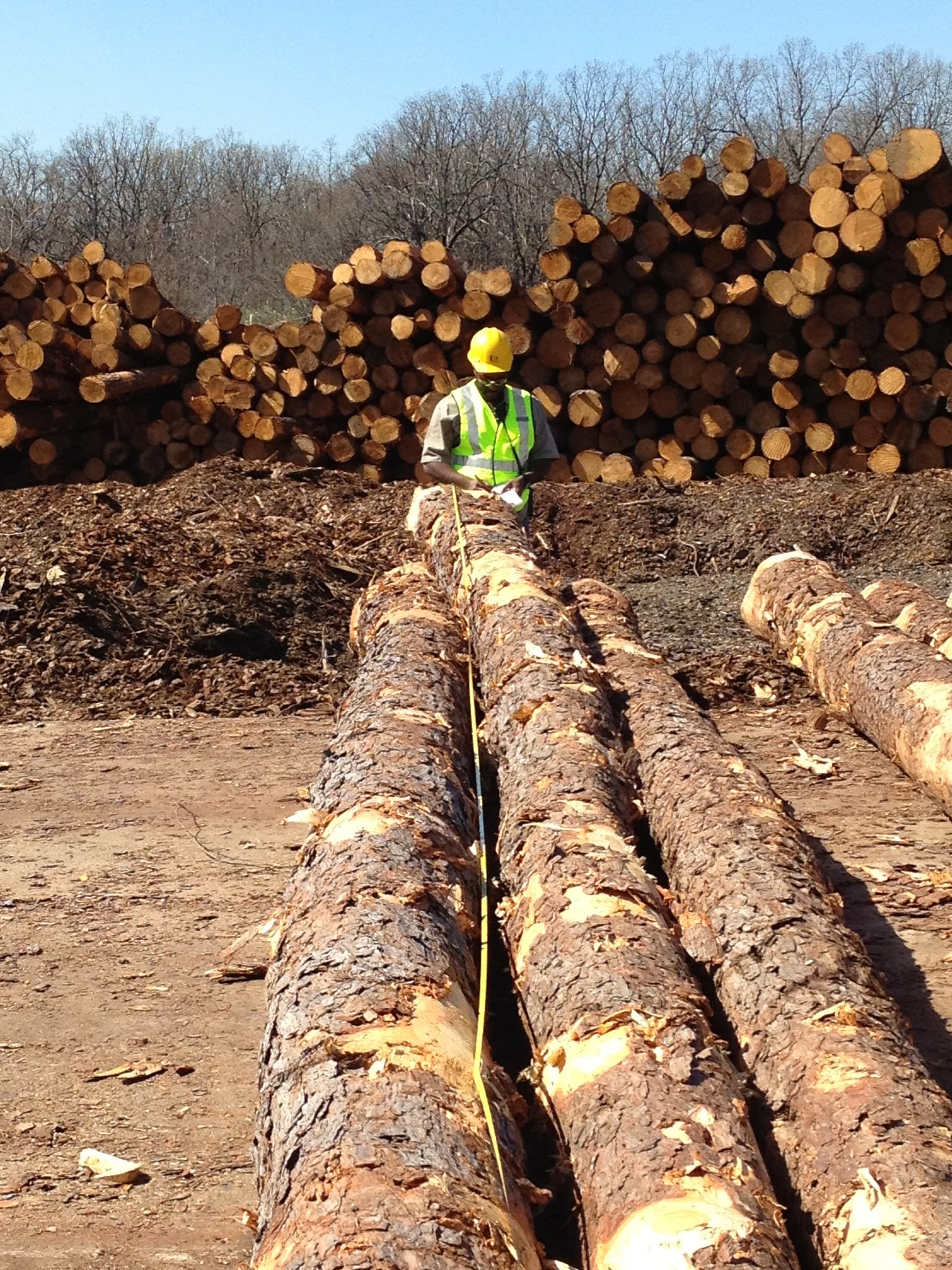 Adapt to Survive: Optimizing the Wood Supply Chain