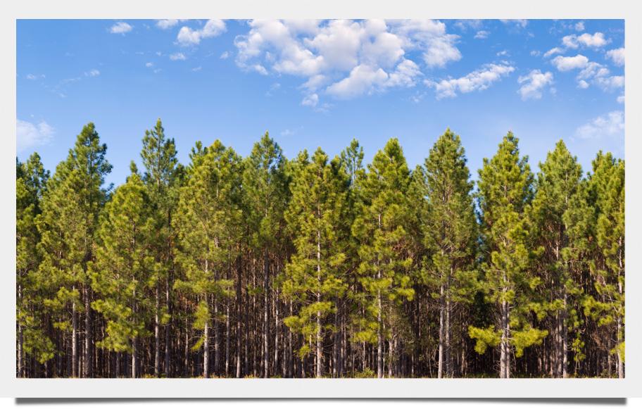 8 previsões para a indústria florestal global em 2017
