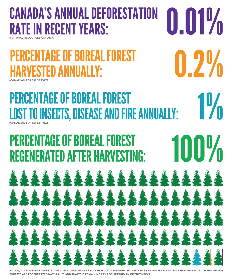 Boreal_Forest_Infographic.jpg