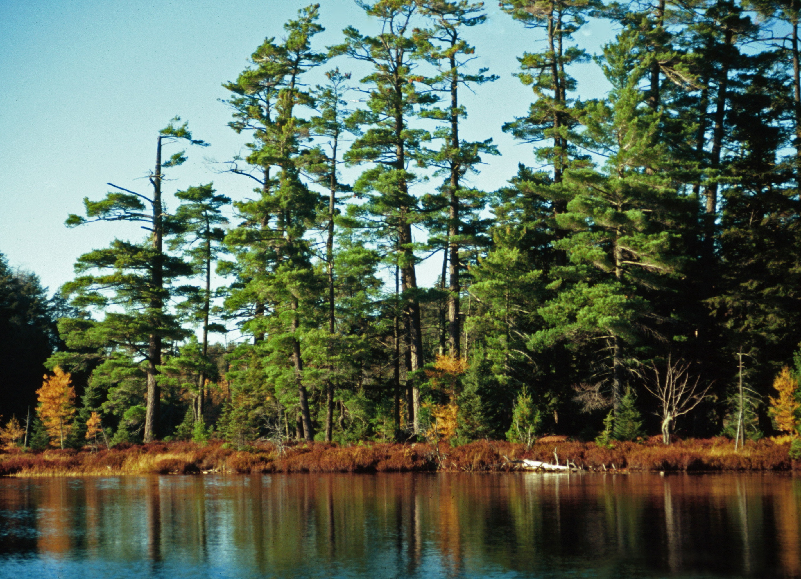 Ottawa National Forest, Sylvania Wilderness, Michigan.jpg