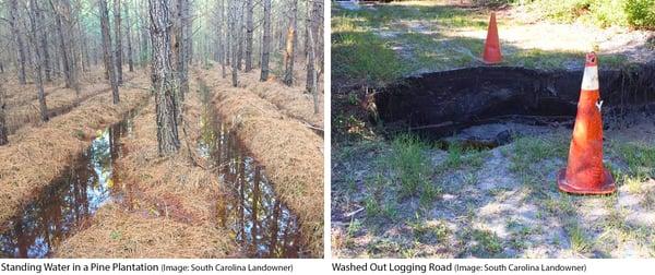 4_logging_road