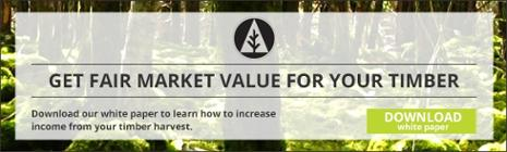 Get fair market value for your timber