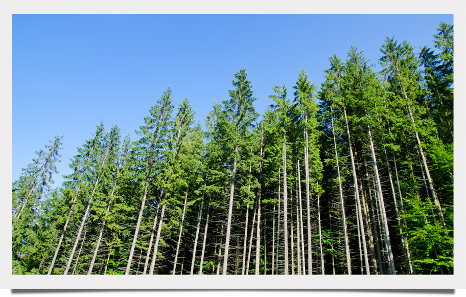 Biomass101 Refutes Anti-Forestry Extremists with Facts, Science