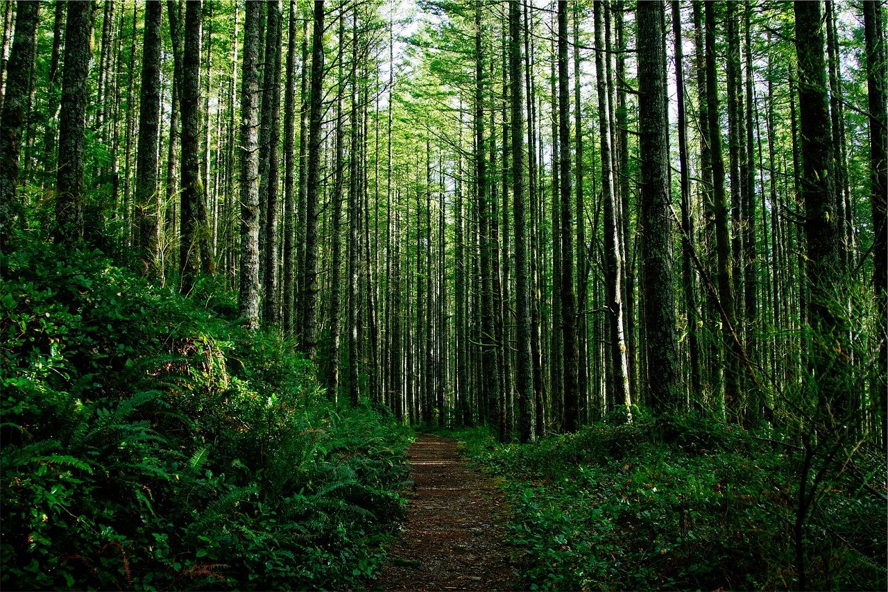 US Endowment Launches New Forum for Forestry-Based Innovation