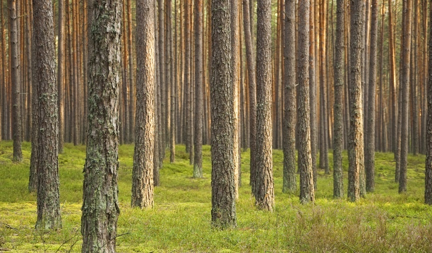 New York Times Column: Advancing the Anti-Forestry Narrative