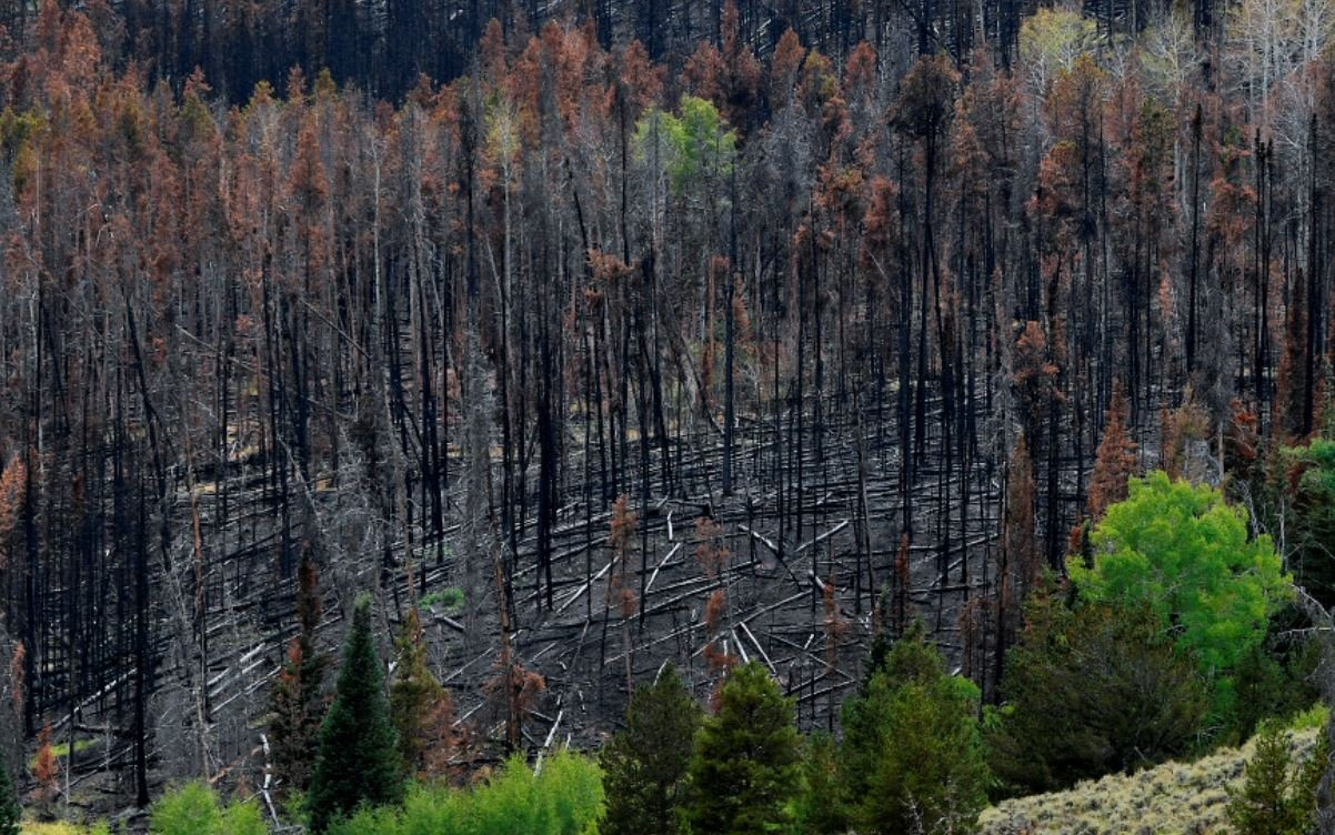Forest Mortality Exceeds Growth in America's National Forests