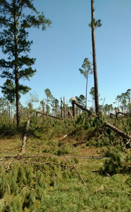 Surveying Timberland Damage in the Wake of Major Hurricanes
