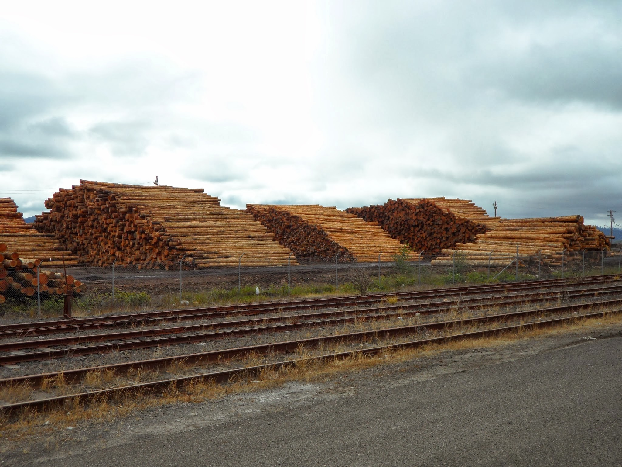 Chinese Tariffs Impacting US Forest Supply Chain