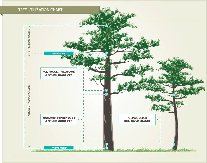 How the Forest Industry Utilizes Harvested Trees