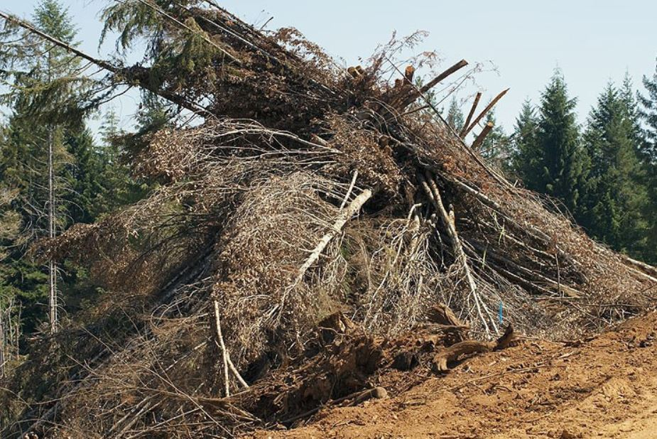 'Waste to Wisdom' Wood Energy Project Publishes Report