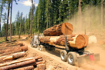 PNW Log Markets Causing Challenges for Regional Mills