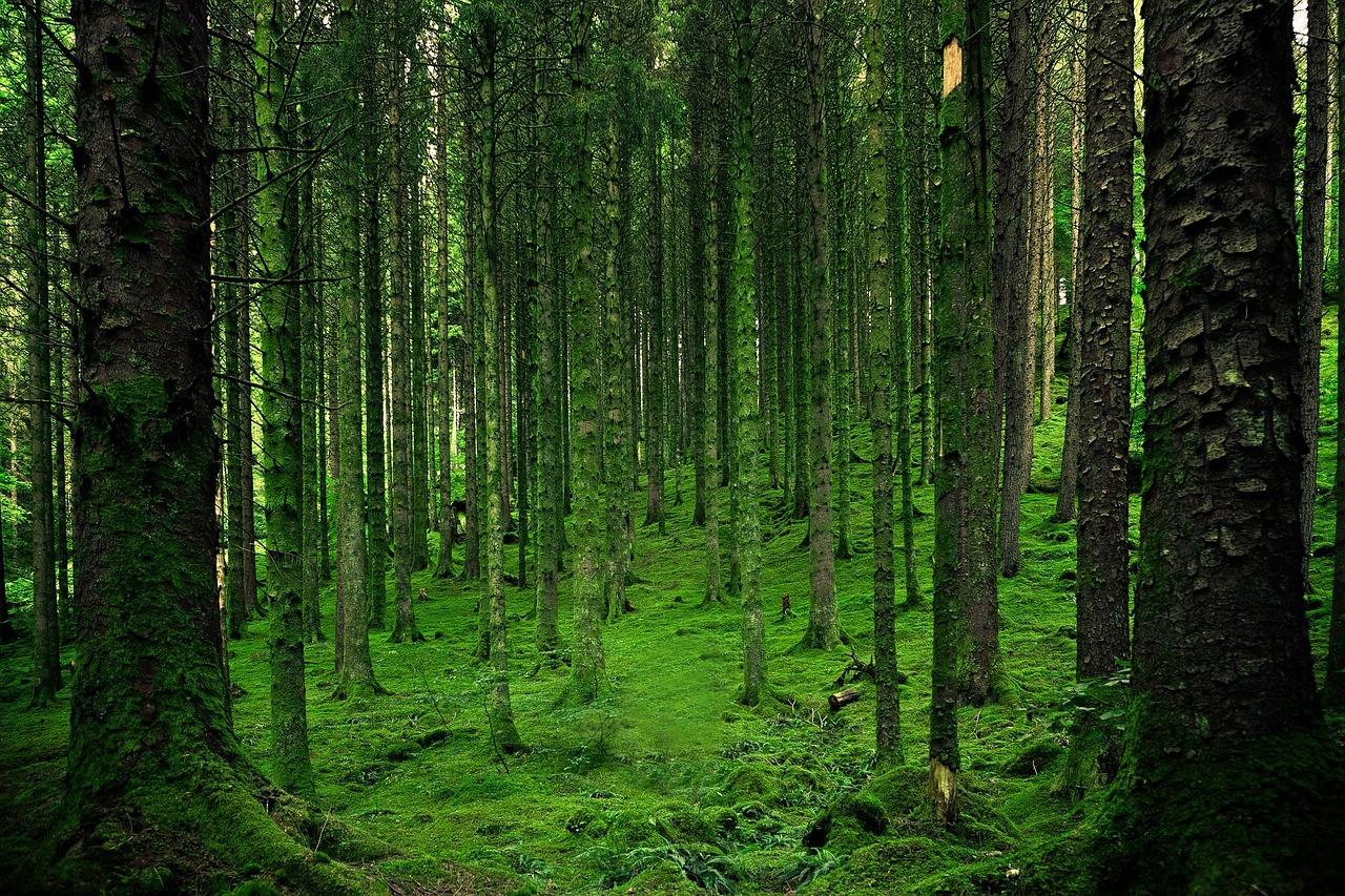 Mild Winter Weather Creates Challenges for Scandinavian Forest Industry